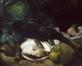 De zwarte fazant<br>Rogy, Georges
