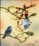 L'oiseau bleu et l'orchidée<br>Fontanges, Nicole
