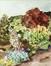 Clin d'œil sur la nature<br>Van Roy, Micheline