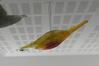 Petit poisson lumineux n°5<br>Parimeros, Dimitri