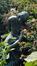 Dromerij of zittende vrouw<br>Compagnie des Bronzes,  / Bisman, Paule