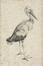 La cigogne<br>Dürer, Albrecht