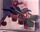 Nature morte : Gloxinia et verre de vin<br>Van de Woestijne,  Gustave