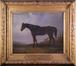 Cheval monté par le Prince d'Orange à la bataille de Waterloo<br>Tschaggeny, Charles