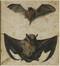 Etude de chauves-souris<br>Holbein,  Hans le Jeune